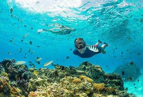 Decathlon s'engage en faveur de la préservation de la biodiversité